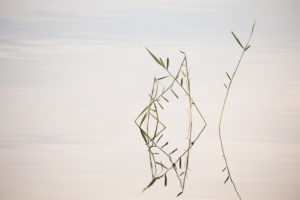 Reed reflection in the lake surface, minimalist lake landscape, Finland