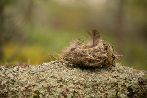 Fallen birdnest on the ground