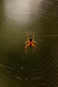 Spider in its web, nature bokeh background