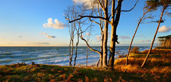 Germany, Mecklenburg-Western Pomerania, Fischland-Darß-Zingst, Darss peninsula, Western Pomerania Lagoon Area National Park, coastal forest on western beach, evening light, view of the stormy Baltic Sea