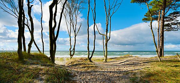 Germany, Mecklenburg-Western Pomerania, Fischland-Darß-Zingst, Darss peninsula, Western Pomerania Lagoon Area National Park, wild coastal scenery, coastal forest, view of Baltic Sea