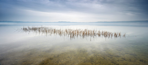 Germany, Saxony-Anhalt, Geiseltalsee, reeds, rain clouds and fog