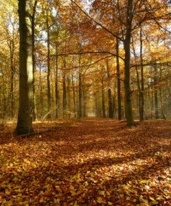 Laubwald im Herbst, Sonnenlicht, morgens, Ziegelrodaer Forst, Sachsen-Anhalt, Deutschland