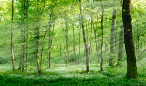 Naturnaher Laubwald im Frühjahr, Frühblüher bedecken den Boden, Sonnenstrahlen, bei Freyburg, Sachsen-Anhalt, Deutschland