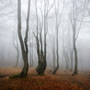 Geheimnisvoller Wald im Nebel, bizarr verwachsene kahle Buchen, Herbst, Erzgebirge, Tschechien