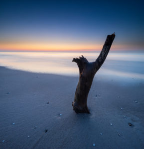 Branch on the sandy beach at sunset, Baltic Sea, peninsula Fischland-Darß-Zingst, Western Pomerania Lagoon Area National Park, Mecklenburg-Western Pomerania, Germany