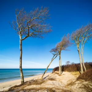 Germany, Mecklenburg-Western Pomerania, Fischland-Darß-Zingst, Darß Peninsula, Vorpommersche Boddenlandschaft National Park, untouched coastal landscape, coastal forest, windswept trees, view to the Baltic Sea