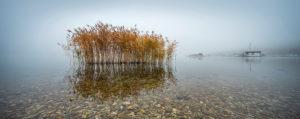 Deutschland, Sachsen-Anhalt, Geiseltalsee, Marina Mücheln, Schilf im flachen klaren Wasser mit Kieseln, dichter Nebel