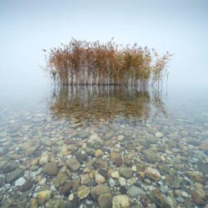 Deutschland, Sachsen-Anhalt, Geiseltalsee, Schilf im flachen klaren Wasser mit bunten Kieseln, dichter Nebel