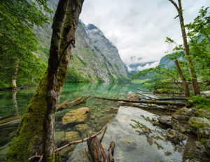 Untouched nature on the shore of the Obersee, tree trunks in the water, low hanging clouds, Berchtesgaden National Park, Bavaria, Germany
