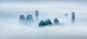 Morning fog, trees rising out of the fog, Unstruttal, Freyburg (Unstrut), Saxony-Anhalt, Germany