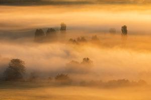 Morgennebel bei Sonnenaufgang leuchtet im ersten Licht, Bäume ragen aus dem Nebel, Unstruttal, Freyburg (Unstrut), Sachsen-Anhalt, Deutschland