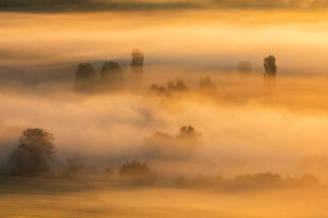 Morning fog at sunrise glows in the first light, trees rise out of the fog, Unstruttal, Freyburg (Unstrut), Saxony-Anhalt, Germany