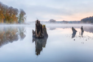 Germany, Mecklenburg-West Pomerania, Müritz National Park, Serrahn sub-area, morning mist on Lake Schweingarten in autumn