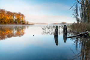 Germany, Mecklenburg-West Pomerania, Mueritz National Park, Serrahn sub-area, morning fog on Lake Schweingarten in autumn, colorful forest reflected