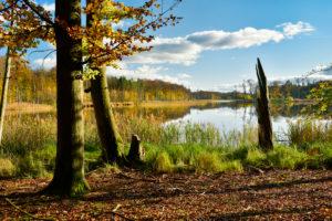 Deutschland, Mecklenburg-Vorpommern, Müritz-Nationalpark, Teilgebiet Serrahn, Alte Buchen am Schweingartensee im Herbst