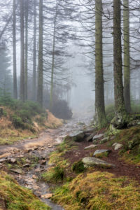 Germany, Lower Saxony, Harz National Park, Kaiserweg, hiking trail through foggy spruce forest
