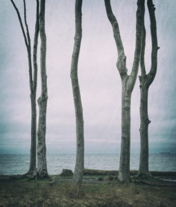 Germany, Mecklenburg-West Pomerania, near Rostock, ghost forest on the Baltic Sea in winter, analog processing,