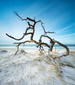 Entwurzelter Baum am Strand der Ostsee, Sandstrand mit Düne, Langzeitbelichtung, Halbinsel Fischland-Darß-Zingst, Nationalpark Vorpommersche Boddenlandschaft, Mecklenburg-Vorpommern, Deutschland