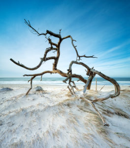 Uprooted tree on the beach of the Baltic Sea, sandy beach with dunes, long exposure, Fischland-Darß-Zingst peninsula, Vorpommersche Boddenlandschaft National Park, Mecklenburg-West Pomerania, Germany