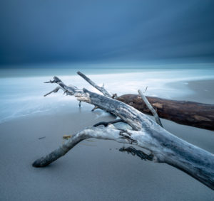 Uprooted trees on the beach of the Baltic Sea, dark clouds, long exposure, Fischland-Darß-Zingst peninsula, Vorpommersche Boddenlandschaft National Park, Mecklenburg-West Pomerania, Germany