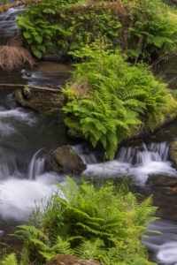 Flowing, silky water with ferns and rocks in the Edmunds Gorge, river Kamnitz, Hrensko, Ustecky kraj, Czech Republic