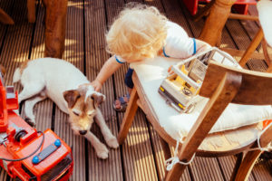Little boy playing with Jack Russel terrier  and vehicle toys, elevated view