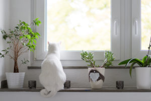 Back view of white cat sitting on window sill