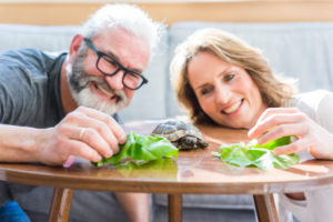 Happy mature couple feeding tortoise at home