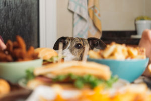 Dog watching dining table full of food at home