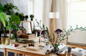 Potted plants and accessories on table