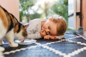 Cute toddler girl watching cat drinking from bowl
