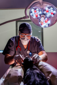Veterinarian in a surgery in clinic