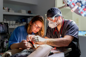 Veterinarian and assistant in a surgery in clinic