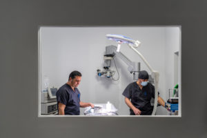 Veterinarian and assistant in operating room in clinic