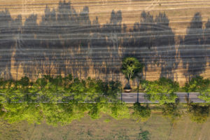 Germany,Brandenburg,Drone view of treelined country road cutting through agricultural field