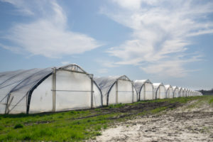 Germany, North Rhine-Westphalia, Ruhr, Row of foil greenhouses protecting fruit plantation