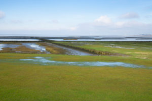 Germany, Schleswig-Holstein, Fenced salt marsh in†Wadden†Sea National Parks during low tide
