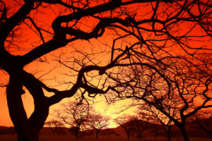 Eswatini, Silhouettes of bare trees against fiery sky at sunset