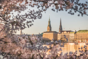 Germany, Hamburg, Buildings surrounding Inner Alster Lake seen through branches of cherry blossom tree
