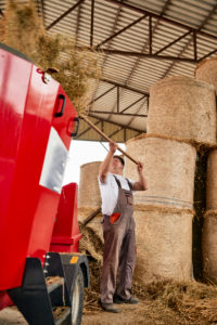 Mature man putting hay in agricultural machinery at dairy farm