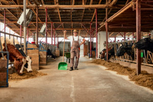Male farmer holding shovel while standing in dairy farm