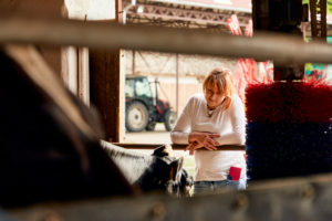 Mid adult woman looking at cow through window at dairy farm