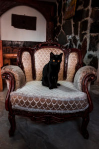 Portrait of black kitten sitting on vintage armchair