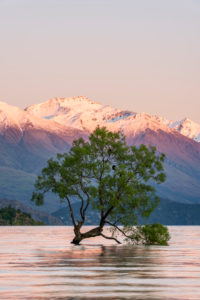 New Zealand, Otago, Lake†Wanaka†and†Wanaka†Tree at dawn with snowcapped mountains in background