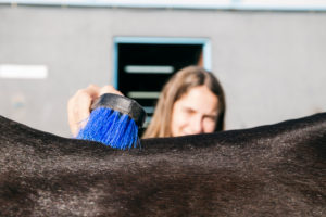 Girl brushing horse's back at ranch on sunny day