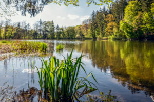 Germany, Bavaria, Egling, Shore of Thanninger Weiher lake