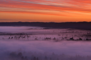 Germany, Bavaria, Pupplinger Au, Forest shrouded in thick fog at moody dawn