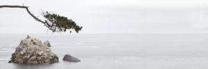 Kalifornien, Pazifikküste, Carmel, Point Lobos State Park, Pinie, Felsen
