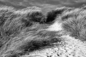 The North Sea, island, Sylt, dune grass